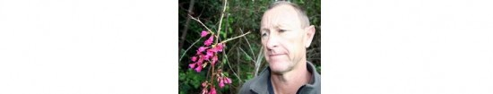 Tony Davies-Colley with a Taiwan cherry tree that is just starting to flower in Whangarei.  The Northland Regional Council member wants people to kill as many of the invasive trees as possible.